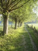 Weg mit Bäumen
